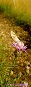 Schmetterling sitzt auf der Blume